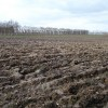 Ploughed orchard