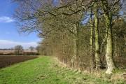 Moulden's Wood