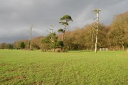Hoads Wood