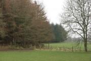 Bridgend Wood