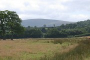 Pasture in the Taw valley, with view to Dartmoor