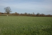 Farmland to the west of Cholstrey