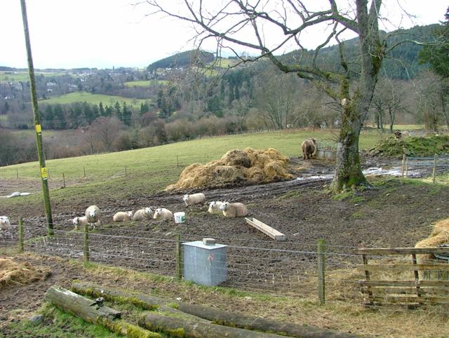 Sheep, Cattle and Fields