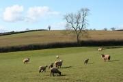 Stockleigh English: near Hollyford Farm