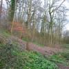 Woodland near Wistaston Brook