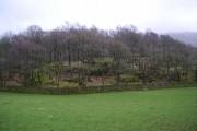 Newfield Wood