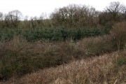 Woodland beside A30
