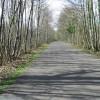 Looking SW through East Blean Woods