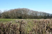 Highampton: near New Farm