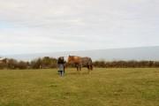 Clifftop farmland at Cerrig Duon