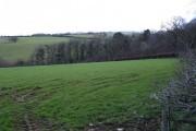Field and wood near Ashbury