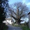The Great oak, Hurstway Common