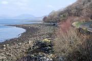 Shore of Loch Fyne