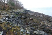 Shore of Loch Fyne