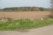 Tickhill Low Common