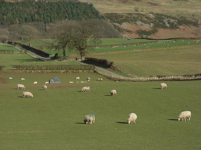 Pastures, Albyfield