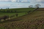 Pastures, Carlatton
