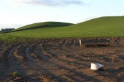 Pastures, Cumrew