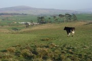 Pasture above Newbiggin