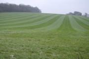 Farmland near Inham's Copse