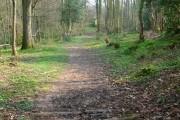 Kiln Wood