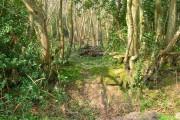 Woodland Boundary, Brownings Wood