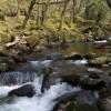 River Plym at Cadworthy Wood