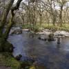 River Plym at Lower Cadworthy