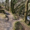 Woodland above River Plym