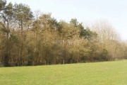 Black Leys wood, near Weston on the Green