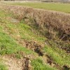 Ditch with marsh marigolds and lesser celandine