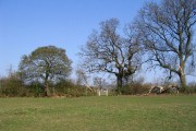 Field near Hawkes End