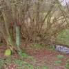 Estate boundary stone