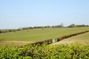 Fields by Elmsleigh Farm