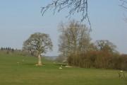 Pasture near Halford Hall