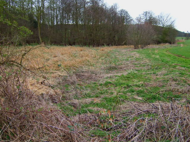 Reed bed at the brookside