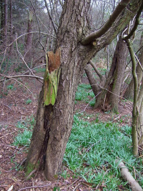 Rotten branch