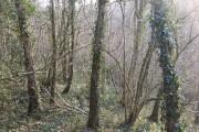 Harton Hollow Wood