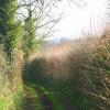 Tunstall Lane
