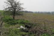 Field near Easton Farm