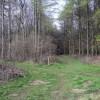Paths, West Wood