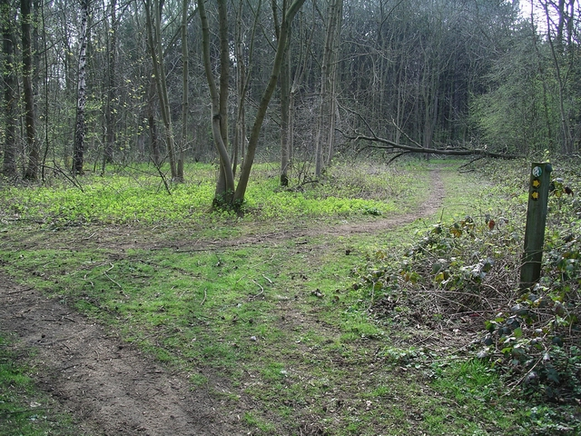 Track with fallen tree