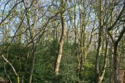 Woodland by Brassey's Contract Road