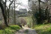 Bishop's Nympton: edge of Week Wood