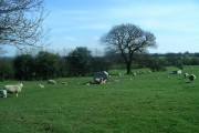Farmland near Ticknall