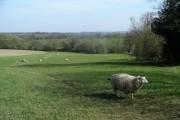 Farmland & sheep
