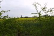 Fields belonging to Common Farm