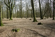 Wickersley  Woods.
