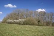 Woodland near Cinderhill Farm