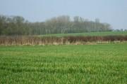Fields near Windmill Farm